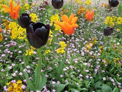 Plate-bande au jardin du Luxembourg