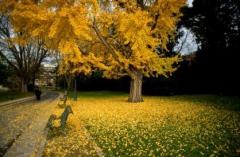 parc montsouris automne.jpg