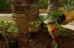 végétalisation du 14ème.jpg