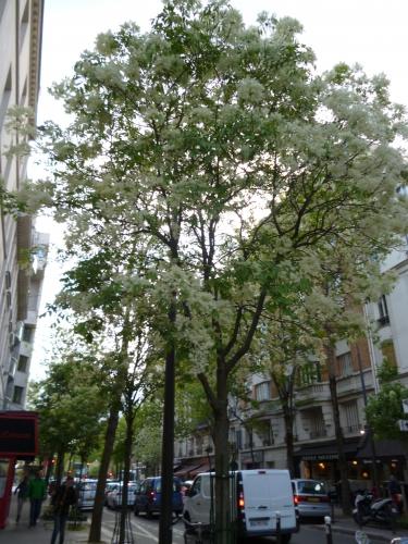 fleurs et parfums avenue Jean Moulin avril 2018.jpg
