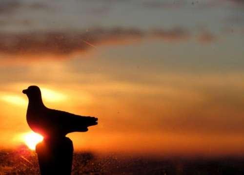 Lever du soleil à Montparnasse, une mouette , photo Marie Belin.JPG