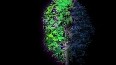 nuit blanche 2014 à la lumière des arbres.jpg