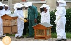 cité u renonce à ss abeilles à son rucher.jpg