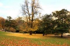 automne à Montsouris.jpg