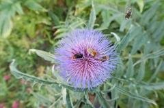 nouveau ru cher chardon et abeille noire.jpg