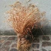 Graine de Quatorzien, association Florimont, fiap -jean monnet 30 rue cabanis