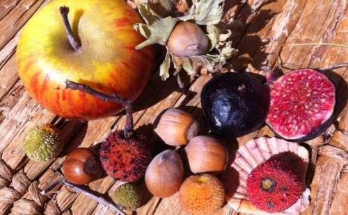 c'est l'automne fruits photo Marie Belin meilleure définition.jpg