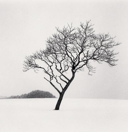 camera obscura expo michael kenna oct-nov 2021 pays de neige grand arbre.jpg