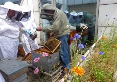 centre d'animation Montparnasse ruches entretien.jpg