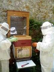 le rucher du jardin partagé de l'Aqueduc.jpg