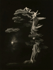 camera obscura expo yamzmoto masao été 2021 bonzaï  la nuit avec la lune jpg.jpg