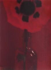 camera obscura expo sarah moon janv-fev 2018 coquelicot.jpg