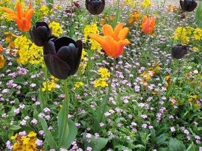 Une magnifique Plate-bande au jardin du Luxembourg MBelin.JPG