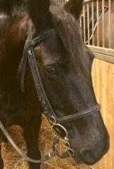 salon de l'agriculture 2019  cheval noir.jpg