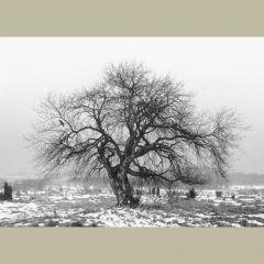 camera obscura janv 2019  expo pentti sammallahti arbre en hiver avec corbeau.jpg