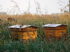 nouveaux ruchers à Paris.jpg