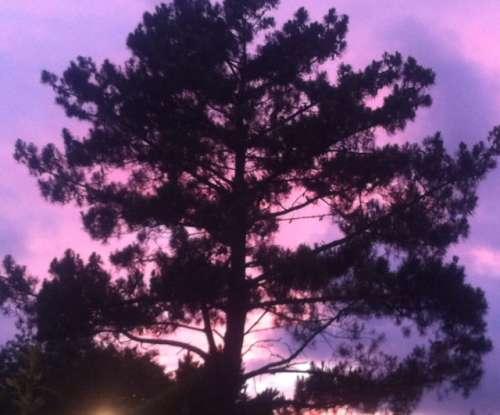 Rose est mon arbre ce soir.jpg