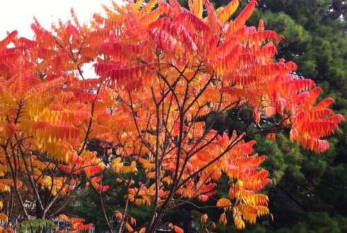 couleurs d'automne au Luxembourg photo Marie Belin octobre 2013.jpg