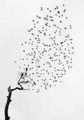 camera obscura expo Pentti Sammallahti 26 oct-nov-dec 2018 les oiseaux arbre avec oiseaux.jpg
