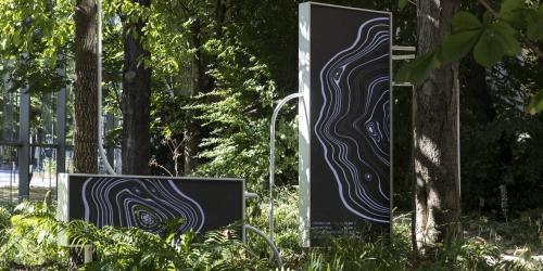 Fondation Cartier-Nous Les Arbres expo du 12 juillet au 10 novembre 2019.jpg