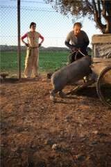 le cochon de Gaza avec ses chaussettes.jpg