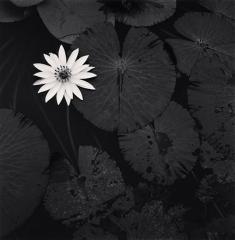 Camera Obscura expo michael Kenna mai -juin 2018 2 flowers nénuphars.jpg