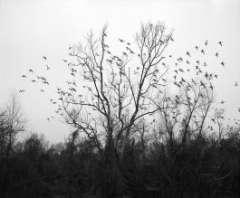 Fondation Cartier Bresson Vanessa Winship oiseaux.JPG