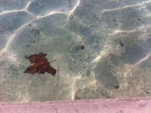 automne au champ de mars photo Marie Belin.jpg
