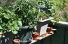 jardin falbala.jpg