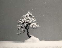 camera obscura expo yamzmoto masao été 2021 bonzaï sous la neige.jpg