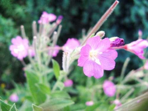 fleurs au jardin atlantique M Belin.JPG