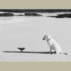 camera obscura expo Pentti Sammallahti 26 oct-nov-dec 2018 l'oiseau et le chien.jpg