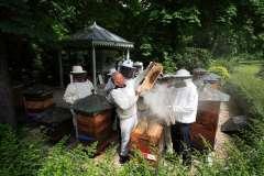 Abeilles-ville-Paris jardin du luxembourg 150 ème anniversaire de la société d'apiculture.jpg