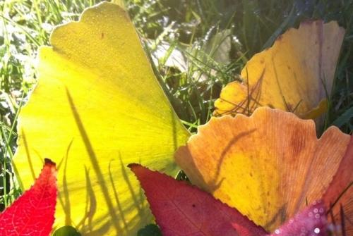Dernières couleurs d'automne photo Marie Belin décembre 2017.JPG