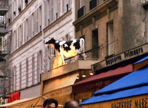 Vache-Daguerre3.jpg