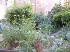 agriculture urbaine,parc montsouris,parc de la cité internationale universitaire,square du sermeent de koufra,jardin vert-tige,jardin du lapin ouvrier,jardin