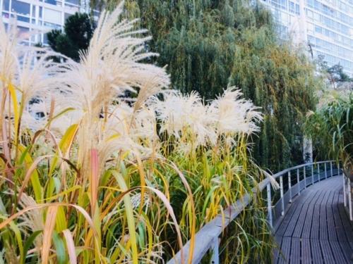 jardin atlantique automne 2018 la passerelle et les herbes folles photo marie belin nov 2018.jpg