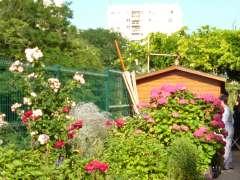 Vert tige cabane et roses P1020103.JPG