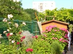 rue de coulmiers 75014,association vert-tige,jardin partagé vert- tige