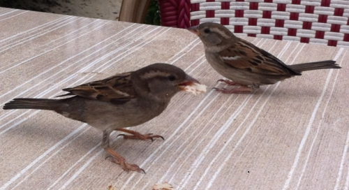 partage avec les oiseaux photo marie Belin mai 2015.jpg