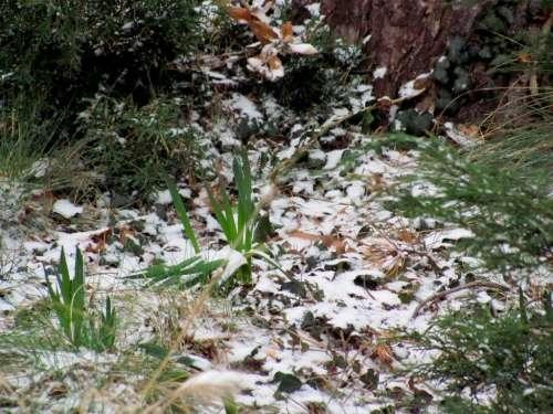 jardin atlantique,février 2012,photos marie belin,la voix du 14ème