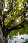 parc Montsouris lac.jpg